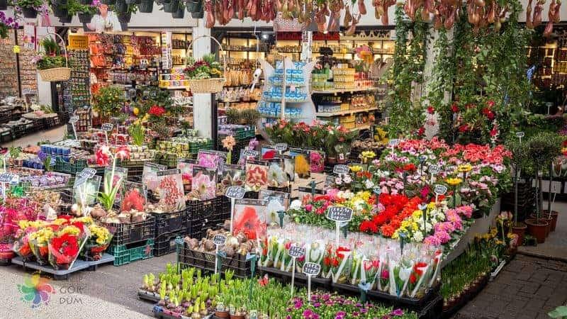 amsterdam'da gezilecek yerler amsterdam çiçek pazarı