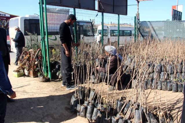 Şanlıurfa'da fidan satışları yeni yılda iki kat arttı